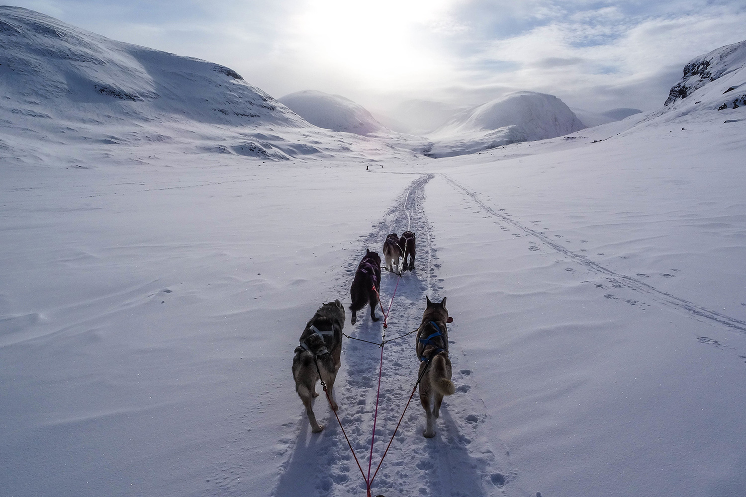 The-'Sleds'-that-Transport-Sled-Dog-Teams