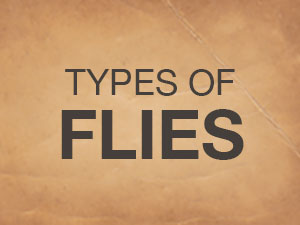 Types Of Flies Button